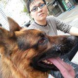 禮拜四寵物星球-狗狗家教,寵物訓練,愛犬訓練,專車接送寄宿管理,寵物多媒體製作,愛犬心理剖析諮詢